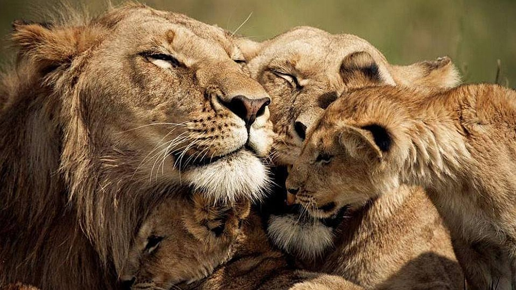 Lions union family - Kenya