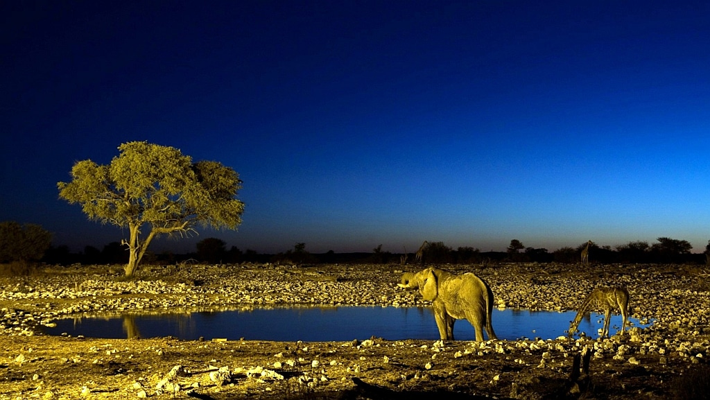Savannah night Overview - Kenya