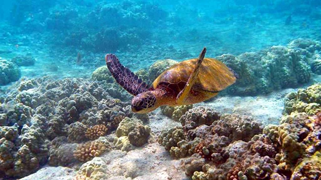 Sea turtle- Kenya