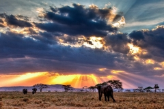 Serengeti-Sunset in Savannah