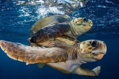 Sea turtles - Kenya