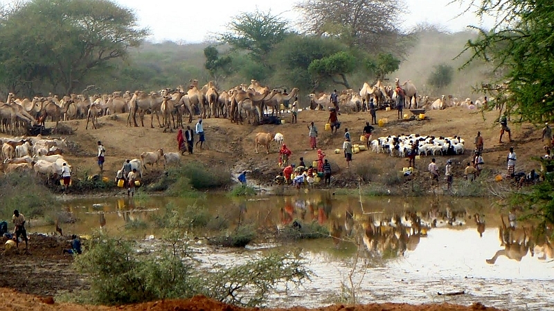 Kenya. Shepherds and their cattle