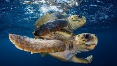 Kenya. Sea Turtles