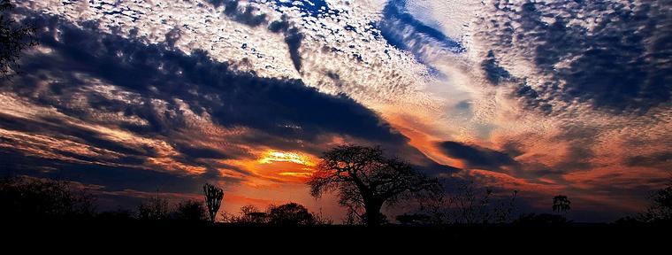 Sunset in Savannah. Kenya