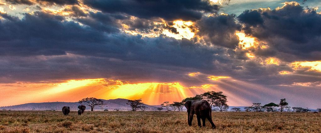 Kenya -Safari