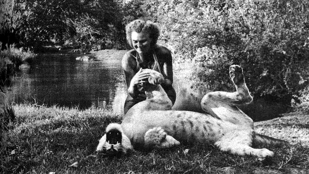 The story of Elsa the lioness - Kenya Holidays