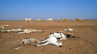 Drought and Desertification in Kenya-Kenya Weather