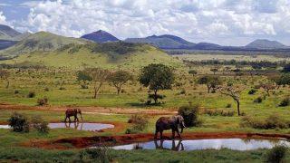 Elephants in Tsavo West National Park-Kenya Holidays