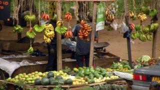 Fruits of Kenya-Kenya Holidays