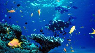 Kenya Diving-Kenya Holidays
