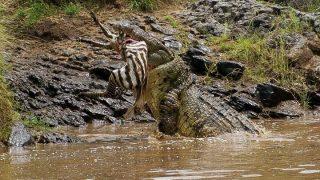 Masai Mara safari-Kenya Holidays