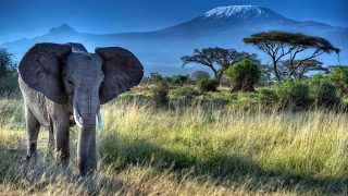 Elephant and Mount Kilimanjaro-Amboseli National Park-Kenya