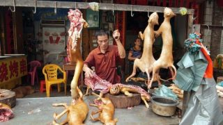 Yulin Festival-The hell for thousands of dogs-Kenya Holidays