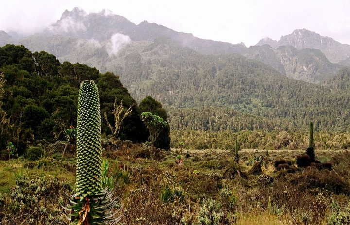 Typical panorama of the Rift Valley