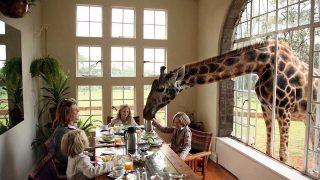 Giraffe Manor Hotel - Ngong Hills, Nairobi